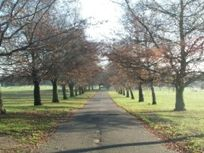 Memorial Park - tree lined drive.