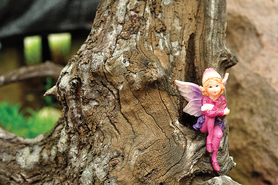 Fairies pixies and gnomes