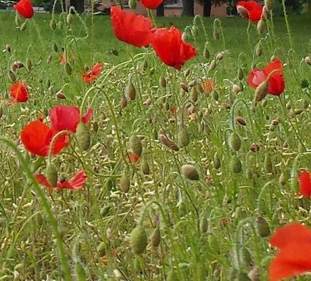 Remembering the Somme